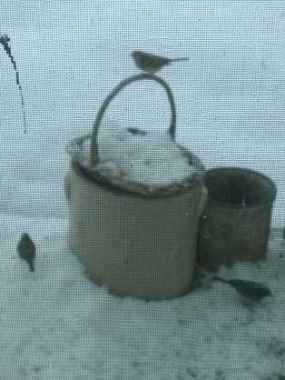 Porch Juncos