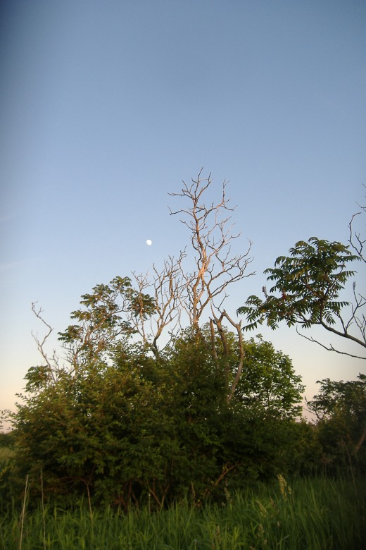 Sumac moon