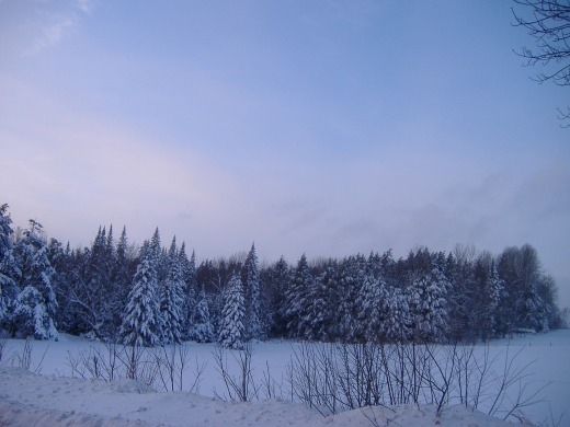 Solace of Snow