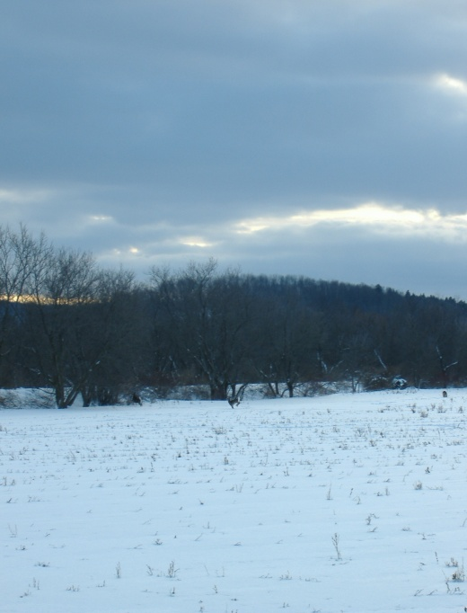 The Stubble Field