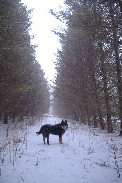 The snowy walk