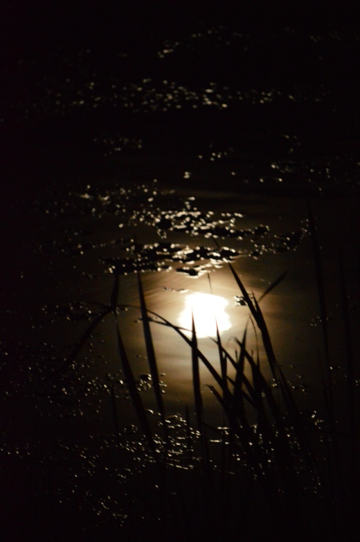 Bowmaker Moon