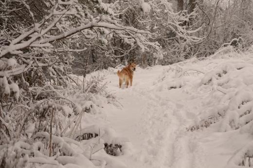 Sassy June in Snow