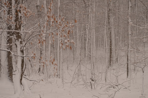 Frosted Wonder Wood