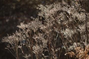 Crystal Floral
