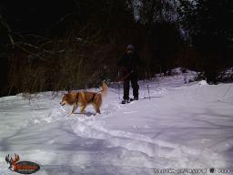 Ski-joring