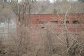 Cormorant Teases Inmates
