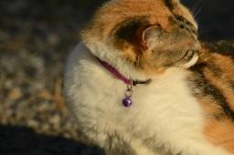 Doone the Wondercat