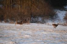 Deer Dash
