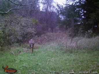 Trailcam Buck