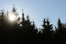 Unruly Sun
