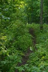 The Trail Awaits