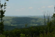 Clearcut Lookout