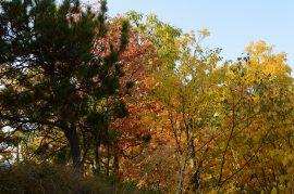 Foliage Mix