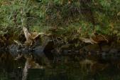 Tenacious Cedars
